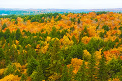 Fall colors Algonquin Park, Ontario, Canada. Royalty Free Stock Photos