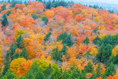 Fall colors Algonquin Park, Ontario, Canada. Royalty Free Stock Photo