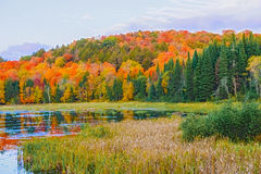 Fall colors Algonquin Park, Ontario, Canada. Stock Images