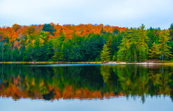 Fall colors Algonquin Park, Ontario, Canada. Royalty Free Stock Images