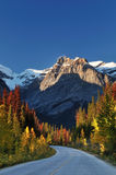 Fall colors alone Emerald Lake Road Stock Photography