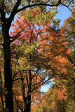 Fall colors along the Blue Ridge Parkway Royalty Free Stock Photography