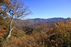 Fall colors along the Blue Ridge Parkway Royalty Free Stock Photos