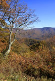 Fall colors along the Blue Ridge Parkway Stock Photography