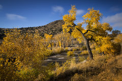 Fall colors along Carson River near Carson City, Nevada. Cottonwood trees in fall foliage along Carson River banks near Carson City, Nevada on sunny day Royalty Free Stock Photos