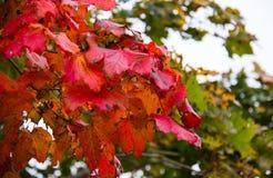 Fall Colors Along the Coast of Prince Edward Island. Canada stock images