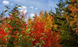 Fall Colors Along the Coast of Prince Edward Island. Canada royalty free stock photography