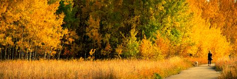 Fall Colors along a footpath. A woman walks a dog along a footpath in the forest of red and green and yellow fall colors royalty free stock photo