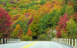 Fall Colors Along the Highway. A wall of colorful trees along the Highway Stock Photography