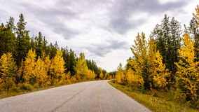 Fall colors along highway 93A Royalty Free Stock Images