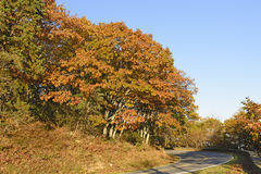 Fall Colors along a Mountain Road Stock Photography