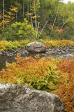 Fall Colors Along River Stock Photography