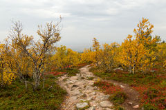 Fall colors. Along stony footpath in Finnish Lapland Stock Photography