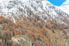 The fall colors of the Alps near Gressoney Stock Photo