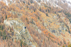 The fall colors of the Alps near Gressoney Royalty Free Stock Images