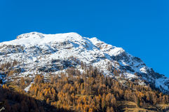 The fall colors of the Alps near Gressoney Royalty Free Stock Photography
