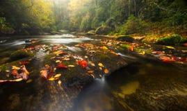 Fall Colors on Appalachian River Stock Photos