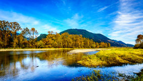 Fall Colors around Nicomen Slough, a branch of the Fraser River, as it flows through the Fraser Valley Royalty Free Stock Images