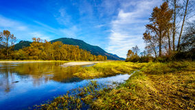 Fall Colors around Nicomen Slough, a branch of the Fraser River, as it flows through the Fraser Valley Royalty Free Stock Photography