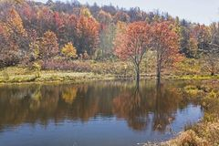 Fall colors around a pond show water reflections. Stock Images