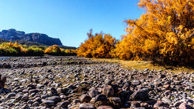 Fall Colors around the Salt River Royalty Free Stock Photos