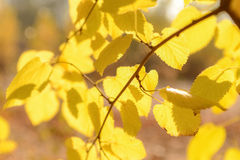 Fall Colors. Autumn Leaves Background. Defocused in the autumn sun lights. Soft Blurines Stock Photo