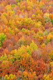 Fall colors in autumn season Stock Photo