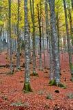 Fall colors in autumn season stock photo