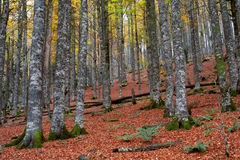 Fall colors in autumn season stock images