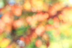 Fall colors background Stock Images
