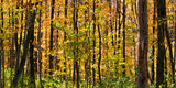 Fall colors banner. Panorama of autumn colors in upstate New York woods Stock Photo