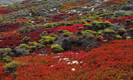 Fall colors in Big Sur California Stock Photography