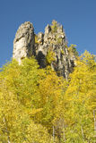 Fall Colors in the Black Hills. Birch and Ponderosa Pine with a rocky spire in the background Royalty Free Stock Images