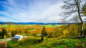 Fall colors of the Blueberry Fields in Glen Valley in the Fraser Valley Royalty Free Stock Image