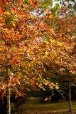 Fall Colors at Bogue Chitto State Park Royalty Free Stock Photo