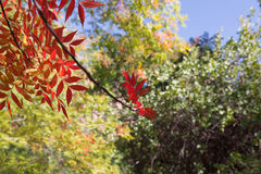 Fall colors. In Boyce Thompson Arboretum stock photo