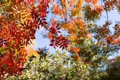 Fall colors. In Boyce Thompson Arboretum stock photos