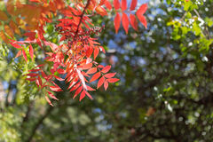 Fall colors. In Boyce Thompson Arboretum royalty free stock photo
