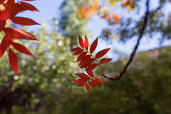 Fall colors. In Boyce Thompson Arboretum stock images