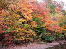 Fall Colors on the C&O Canal Royalty Free Stock Image