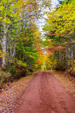 Fall colors in Canada. Fall colors, brilliant colored trees and red dirt road royalty free stock photos