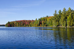 Fall Colors at Canoe Lake in Algonquin Park Stock Photography