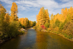 Fall colors Cascade Mountains. Fall colors in foliage reflected in Teanaway River near Cle Elum, Washington, USA. Fall season comes to Cascade Mountains in Royalty Free Stock Photography