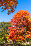 Fall Colors in Central Park Royalty Free Stock Photography