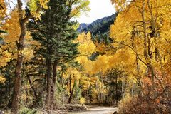 Fall Colors in Central Utah Mountains Royalty Free Stock Photos
