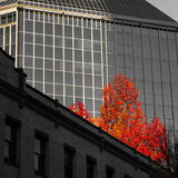 Fall Colors in the City. Fall leaves in the city Royalty Free Stock Photography