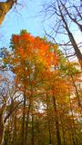 Fall colors in the clouds. Beautiful fall colors ontop of the tallest trees Stock Photography