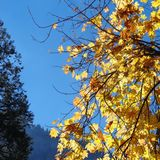Fall colors. A cold morning in yosemite valley Stock Photo