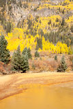 Fall colors of Colorado Stock Photo