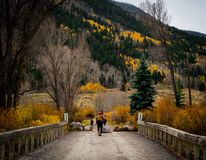 Fall Colors on the Continental Divide Trail royalty free stock images